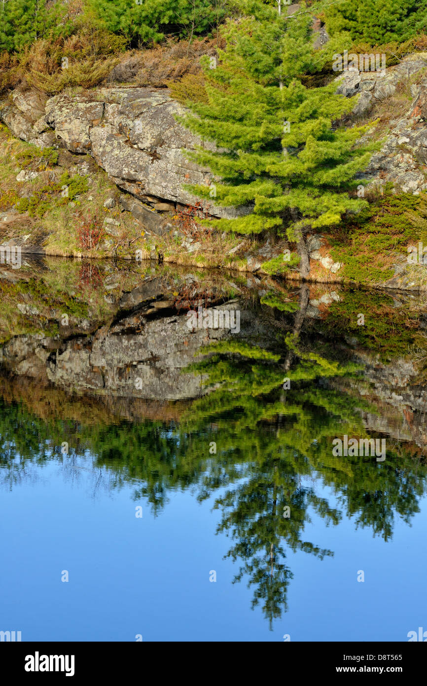 Granites and pines reflected in a small pond Whitefish Falls Ontario Canada - Stock Image