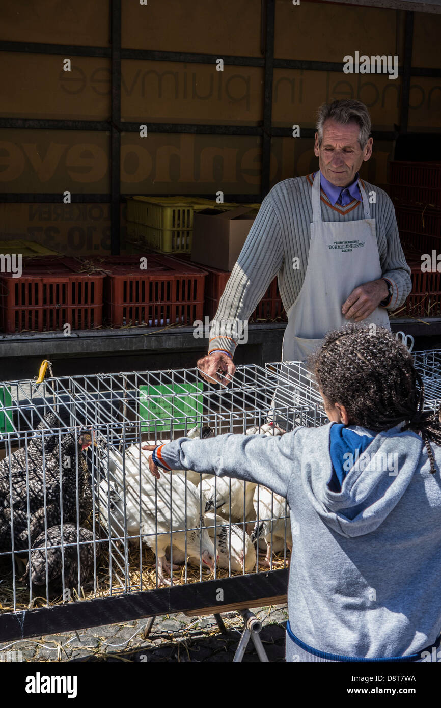 Stallholder in poultry stand and child looking at chickens in cages for sale at domestic animal market - Stock Image