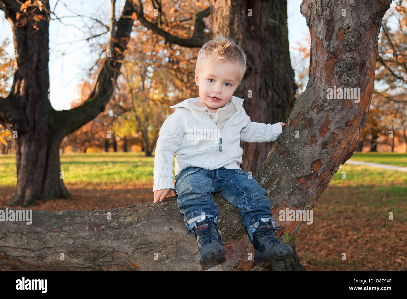 Two year-old boy sitting on a branch in a park - Stock Image