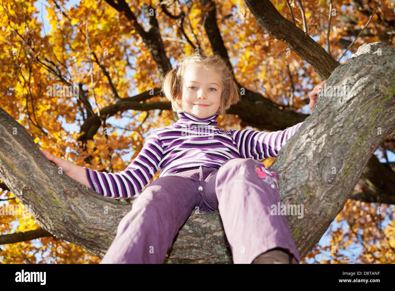 Six year-old girl sitting on a tree in autumn - Stock Image