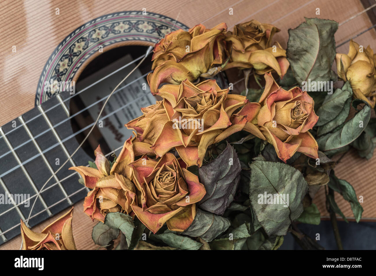 Old roses - faded, dried yellow roses on a Spanish guitar with a broken string. - Stock Image