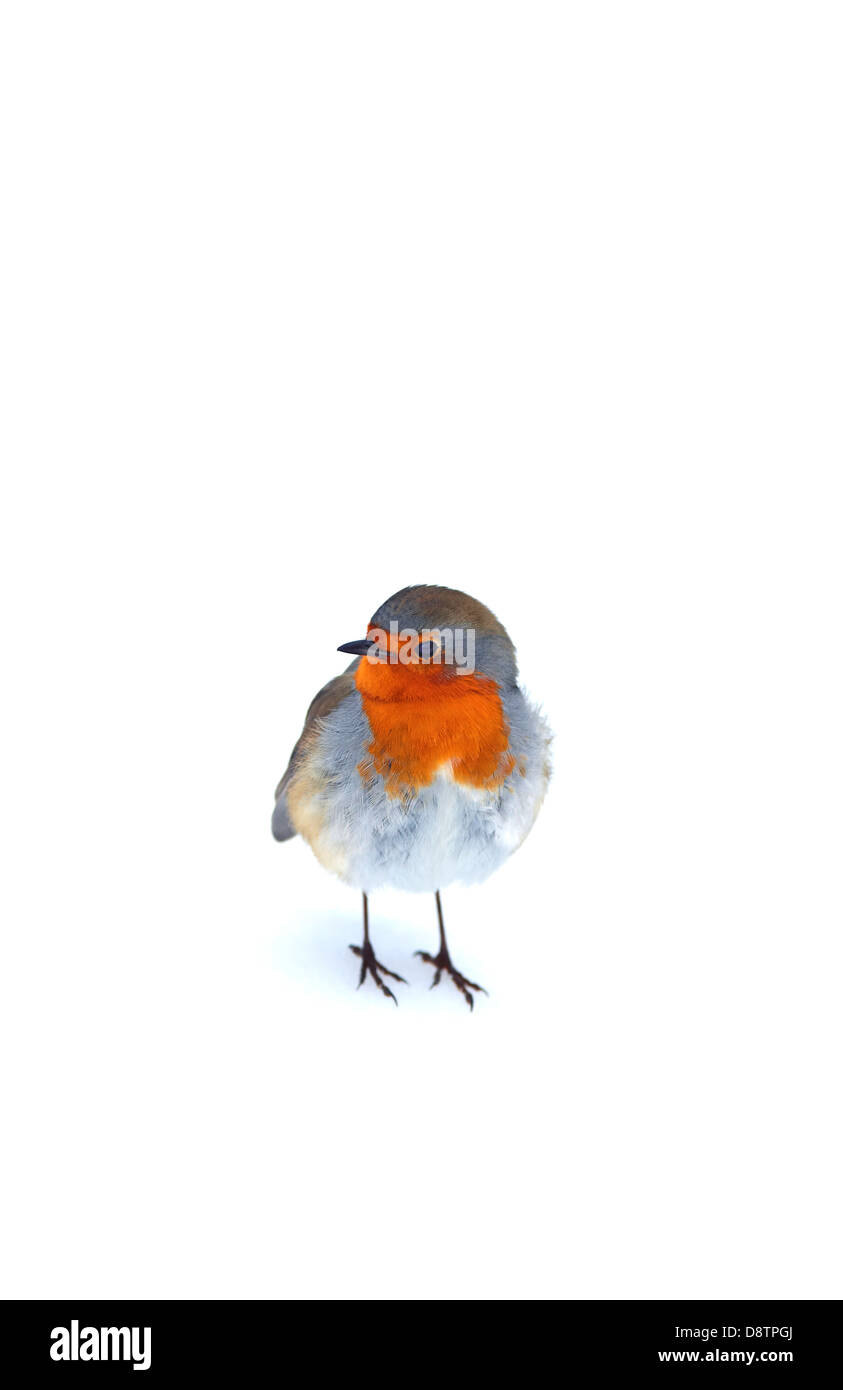Robin in the snow - Stock Image