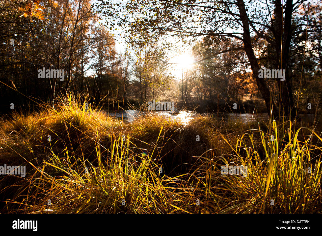 paisaje, landscape, scenery, scene - Stock Image