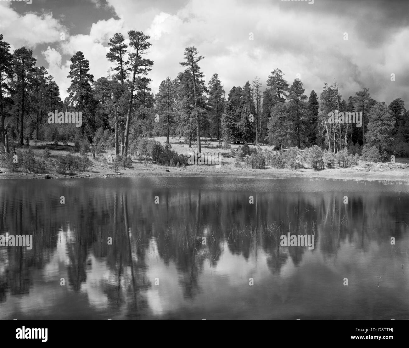 A relaxing scenic with a reflection of the pine tree line in the still water of Shultz Tank just outside of Flagstaff, - Stock Image