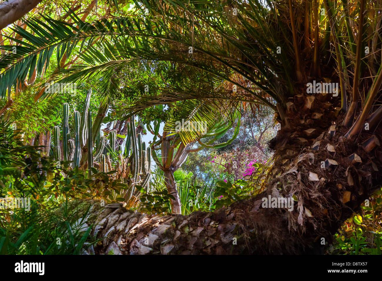 Jungle park at Tenerife Canary - Stock Image