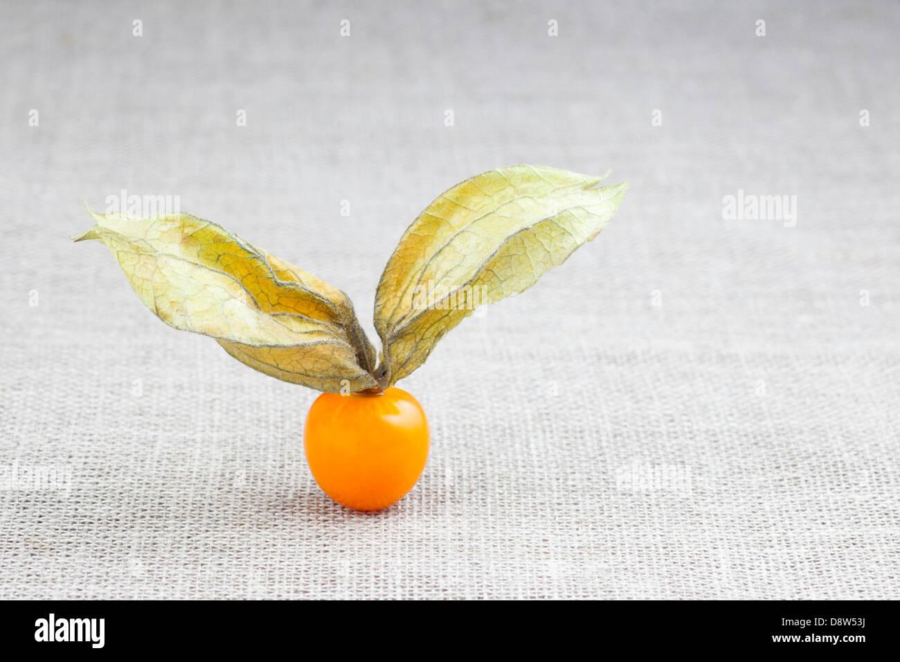 Fresh golden berry (Physalis peruviana) on Irish linen - Stock Image