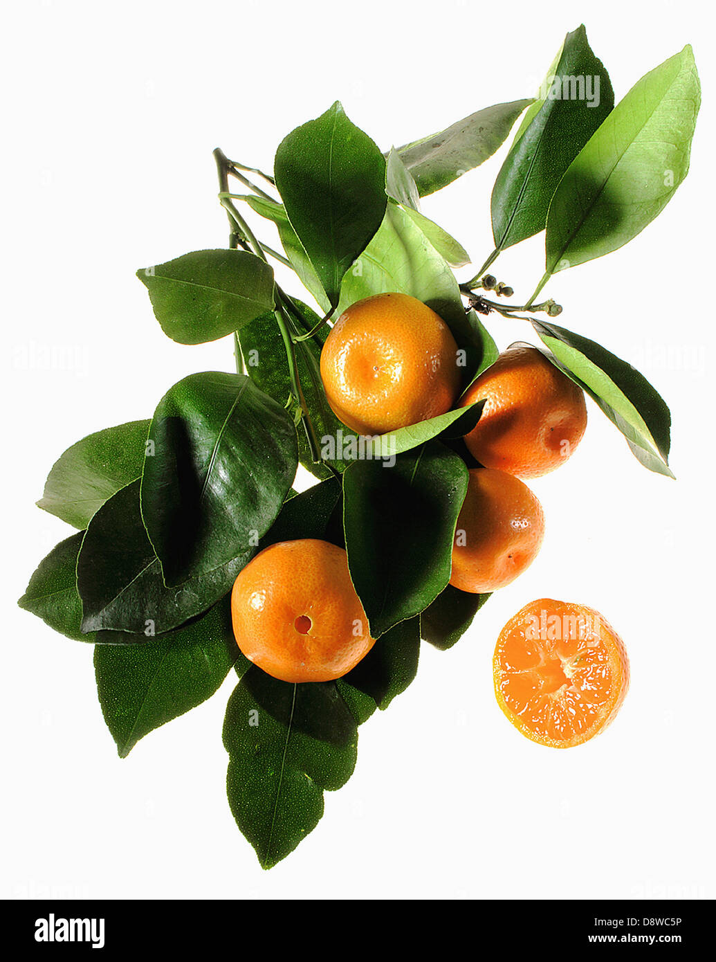 Cut-out clementines and leaves - Stock Image