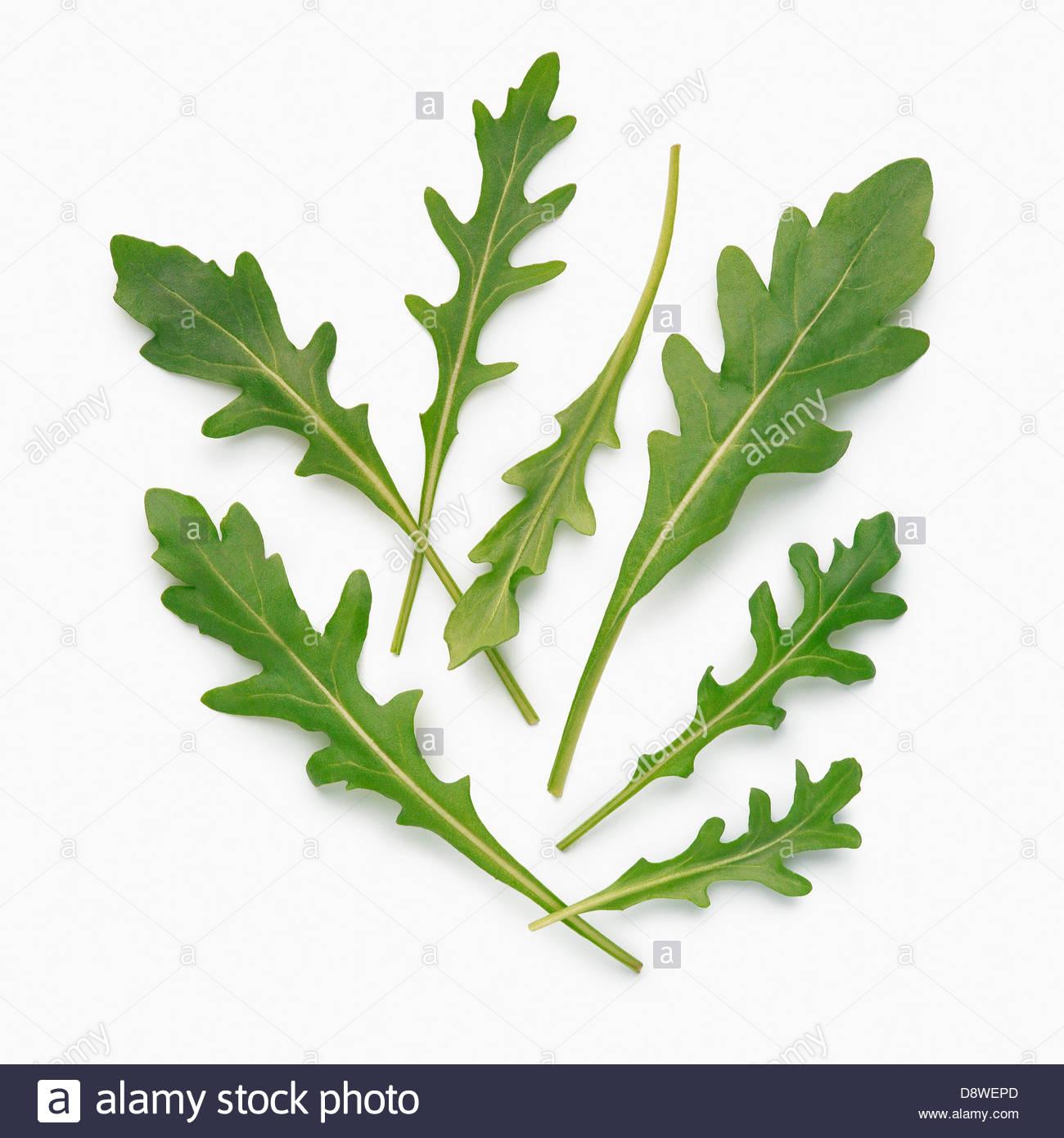 Rocket lettuce - Stock Image