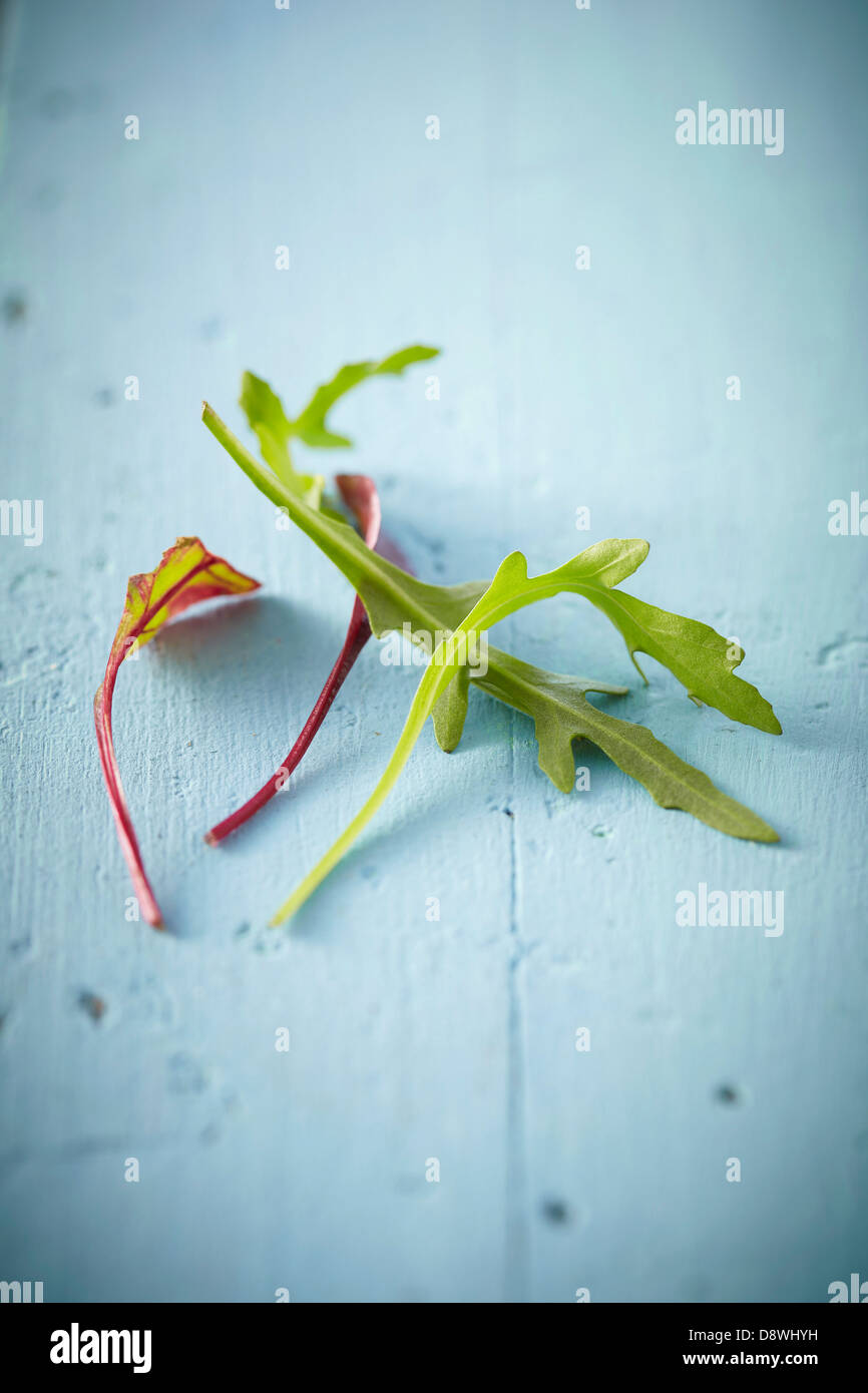 A few rocket lettuce leaves and beetroot sprouts - Stock Image