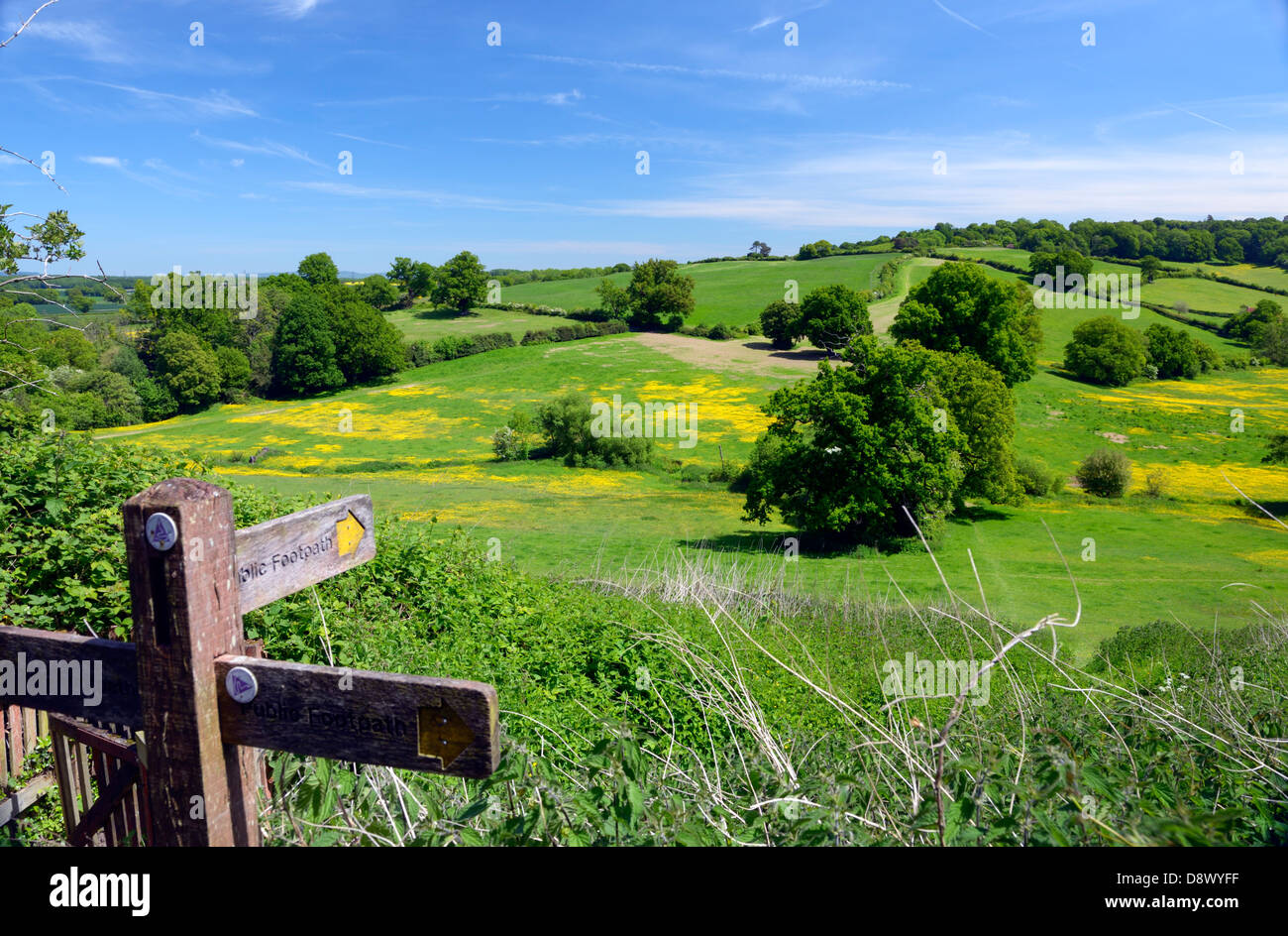 Countryside to the east of the market town of Petworth, West Sussex, UK - Stock Image