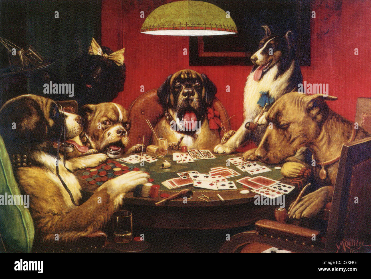 Gambling dogs picture