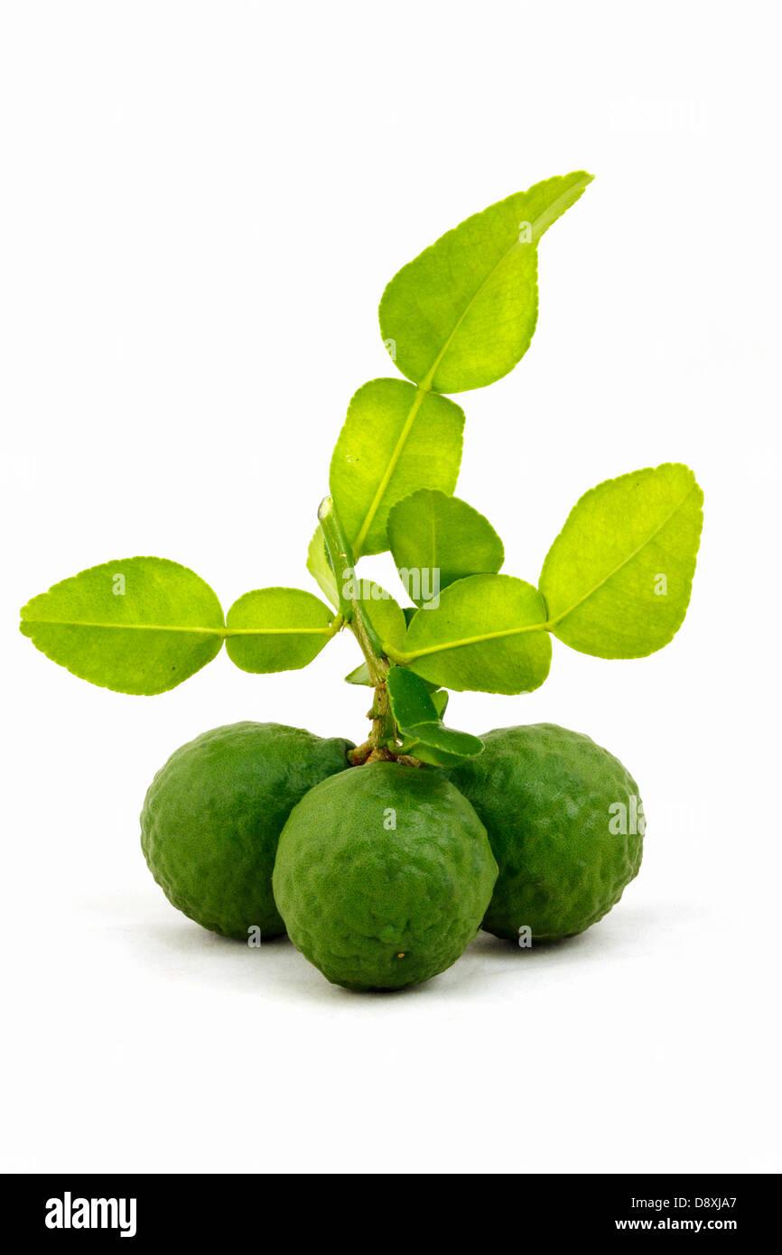 Organic bergamot and bergamot leaves isolated on white background. Stock Photo