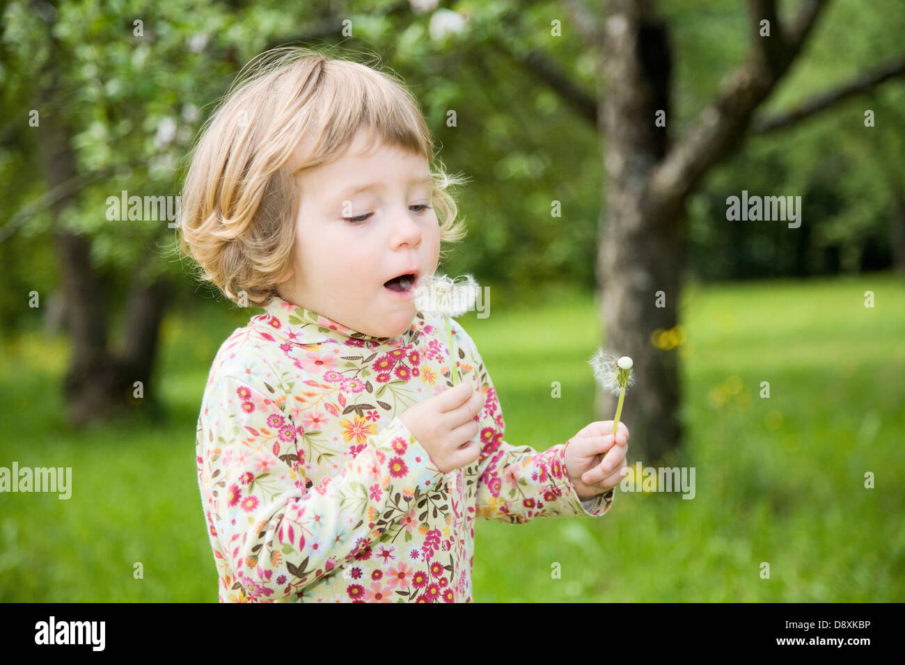 Three year-old girl with a dandelion in his hand - Stock Image