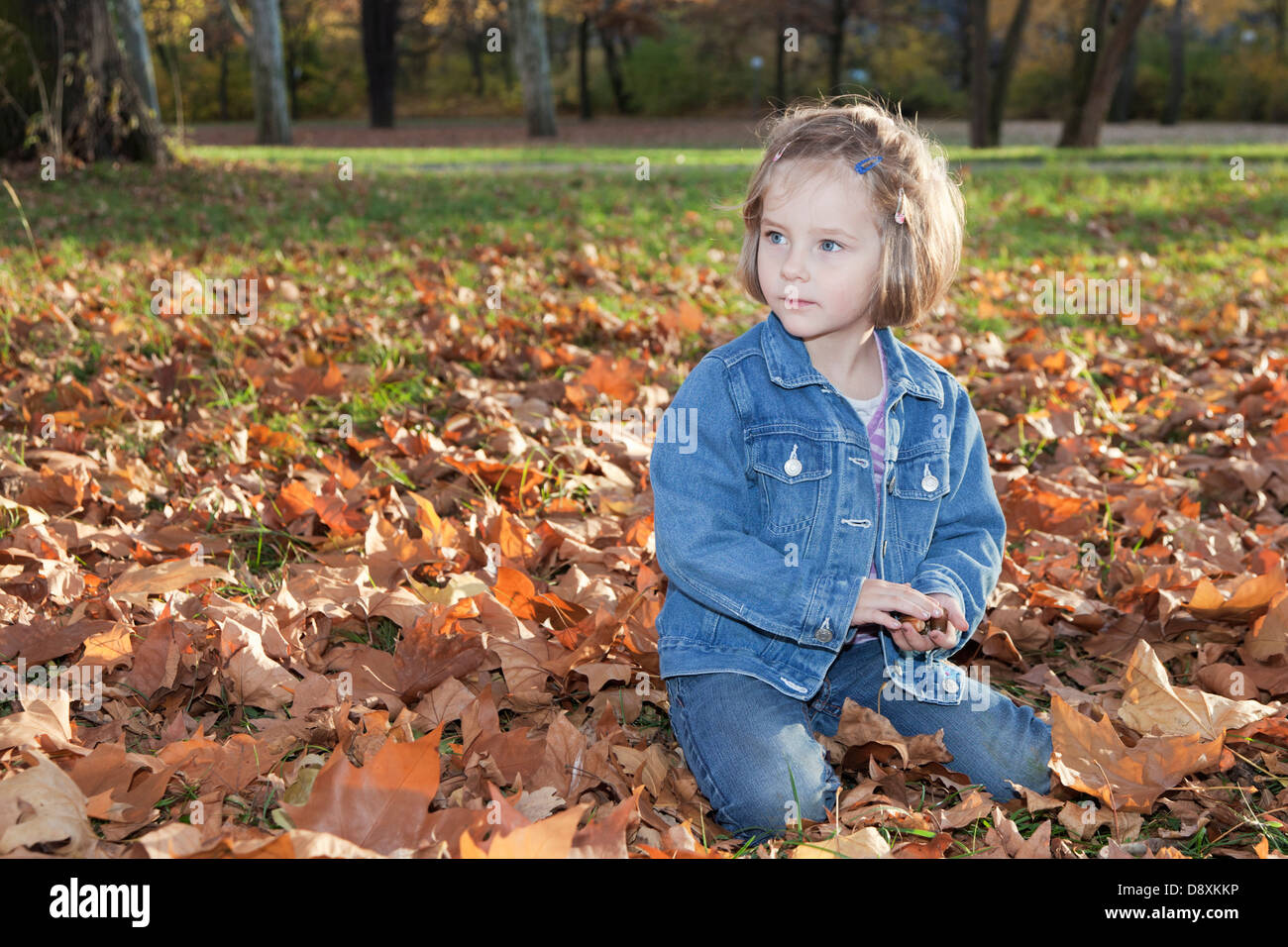 Four year-old girl collecting acorns - Stock Image