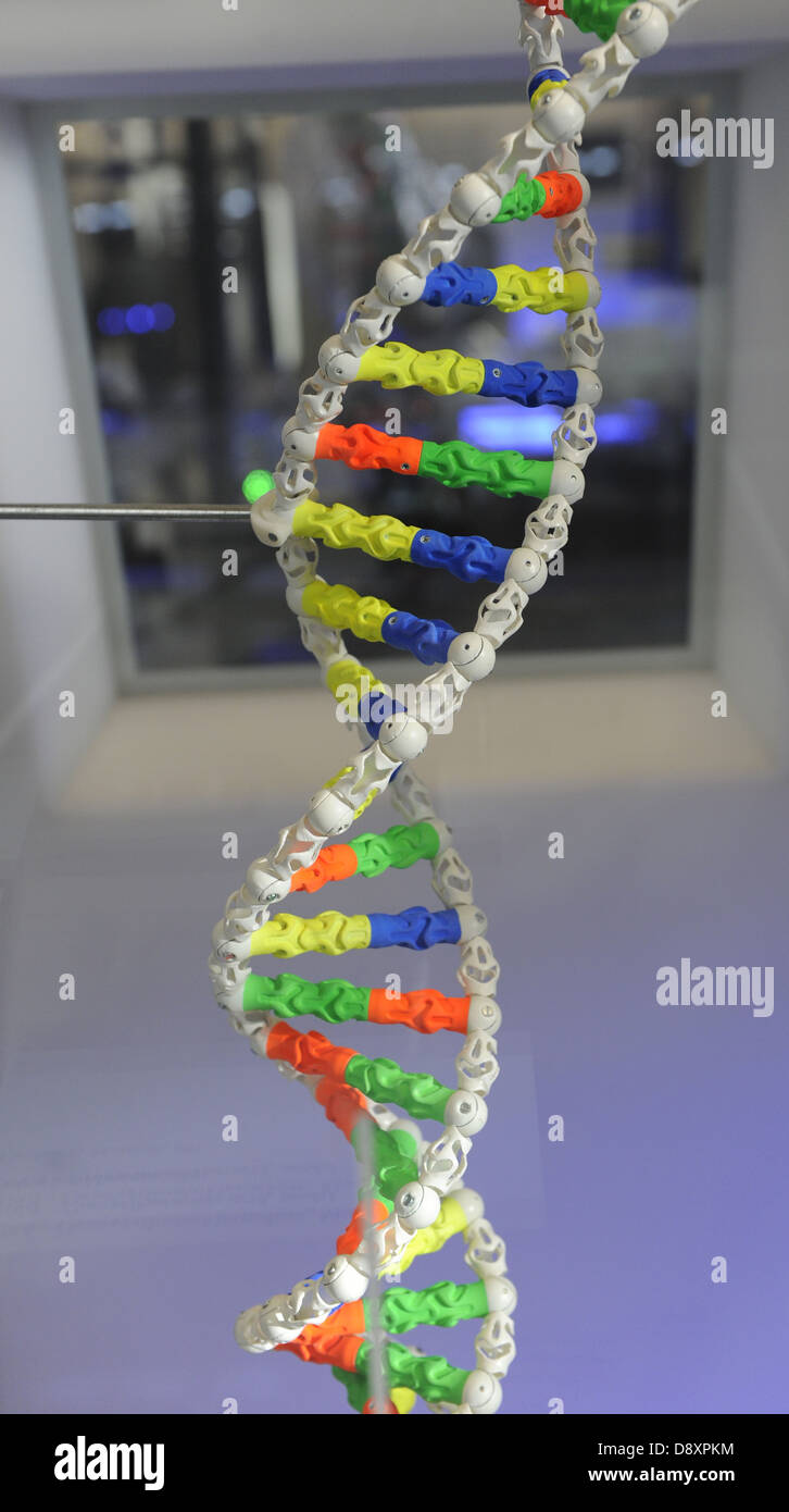 DNA. Deoxyribonucleic acid, model. - Stock Image