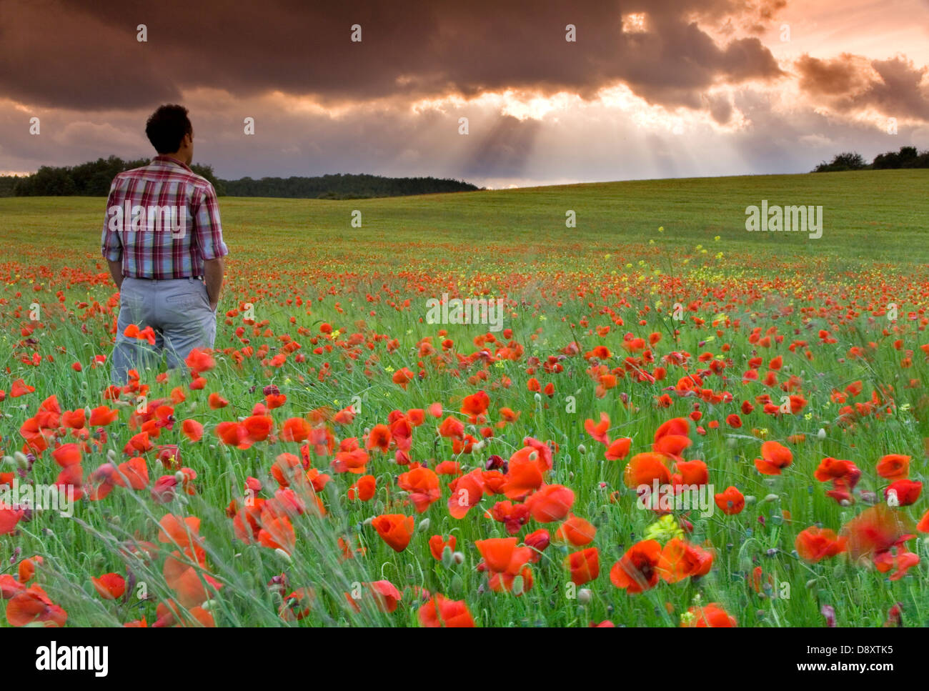 man watching storm clouds on a poppy field - Stock Image