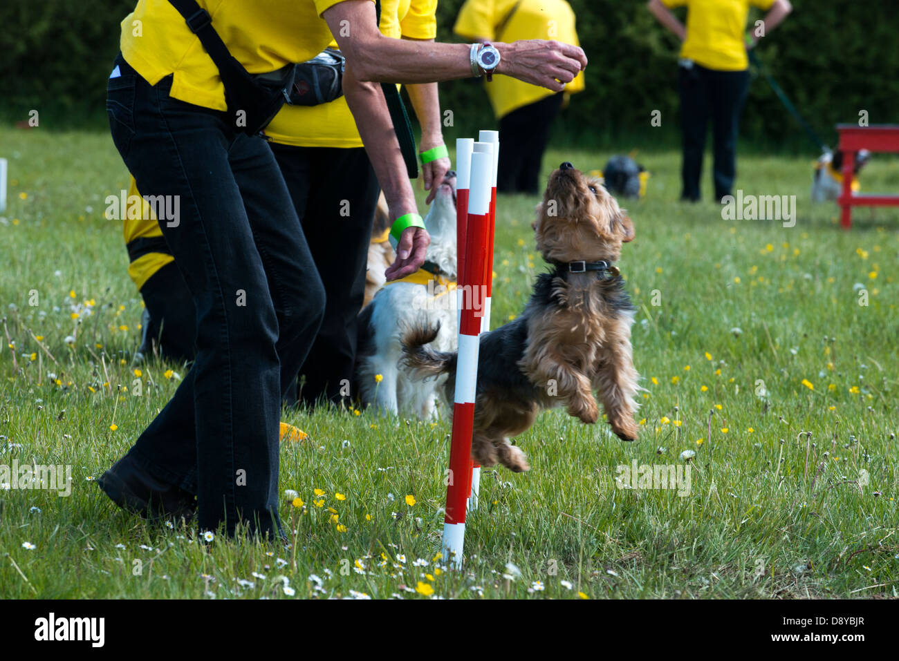 Canine Obedience Dog Display at the Overlord show, Waterlooville, Hampshire, UK - Stock Image