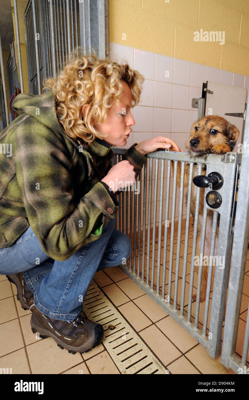 Kate Humble visits the Dogs Trust near Bridgend, S. Wales where she is completing the adoption of a pet dog Bella - Stock Image