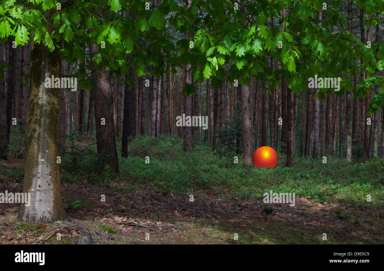 Glowing orange ball by trees in forest, a mystical abstract meaningful concept - Stock Image