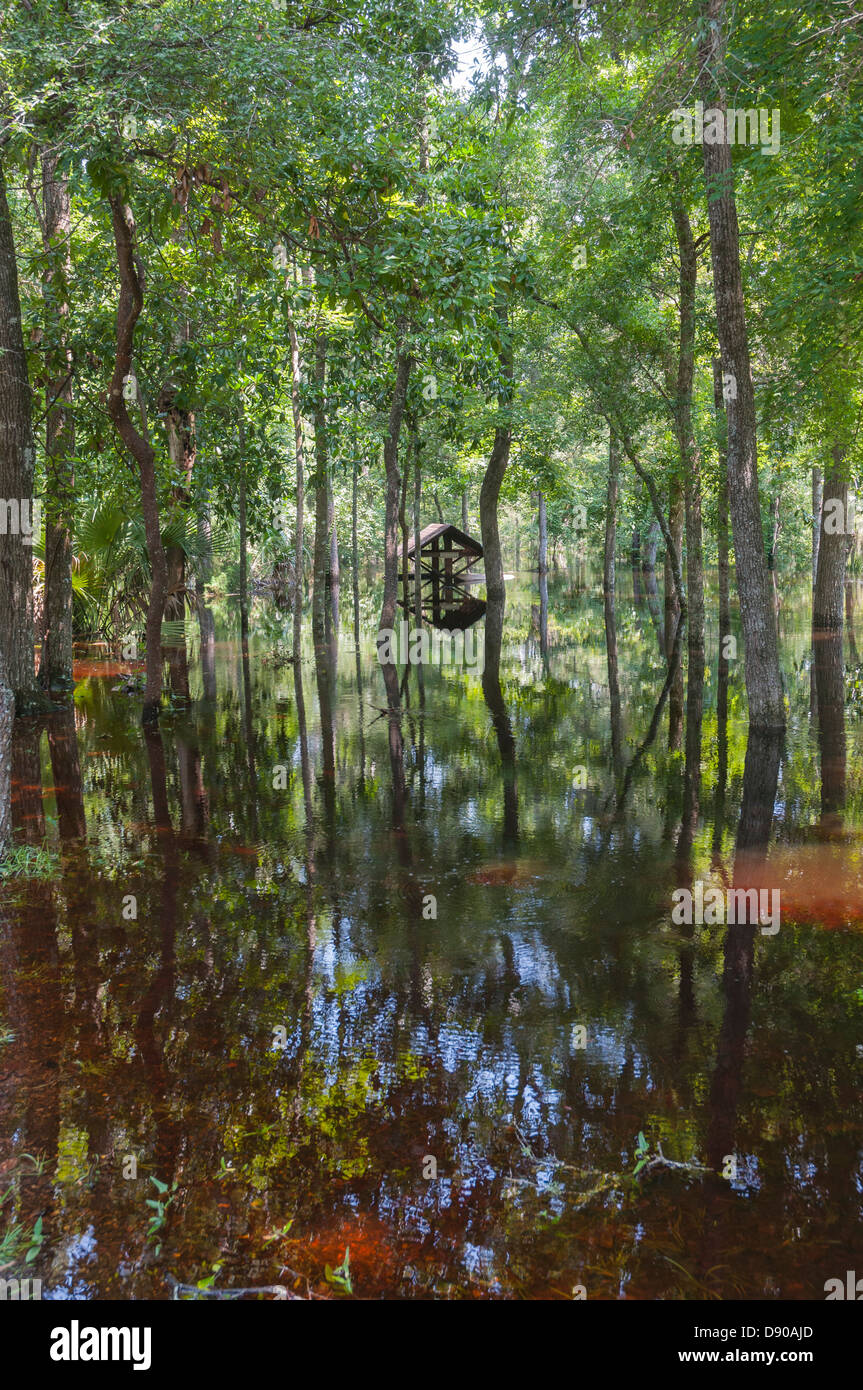 Flooding at Oleno State Park after Tropical Storm Debby hit North Central Florida 6-12. Stock Photo
