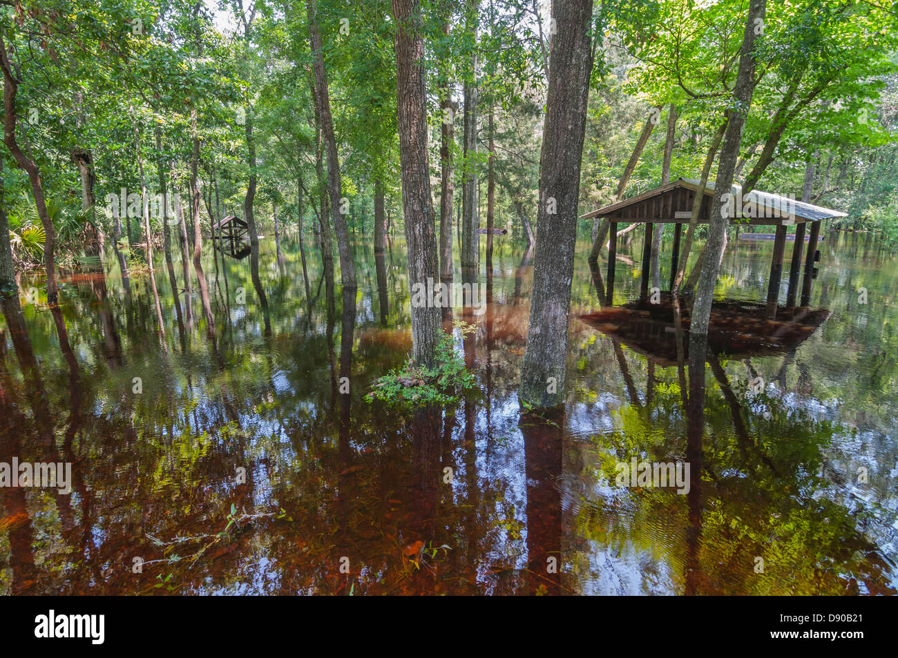 Flooding at Oleno State Park after Tropical Storm Debby hit North Central Florida 6-12. - Stock Image