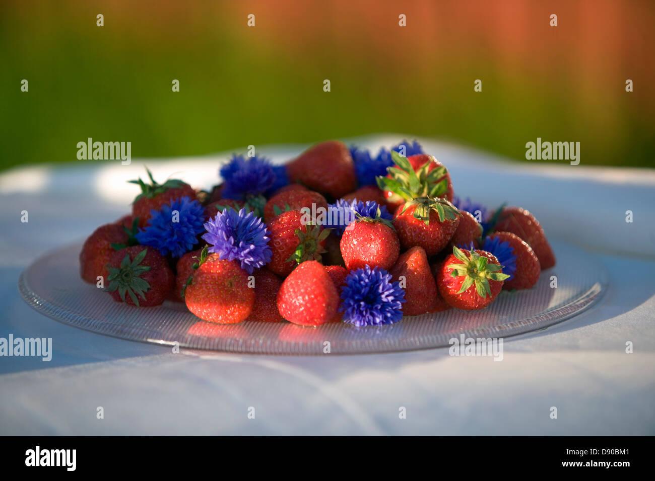 Strawberries, Fejan, Stockholm archipelago, Sweden. Stock Photo
