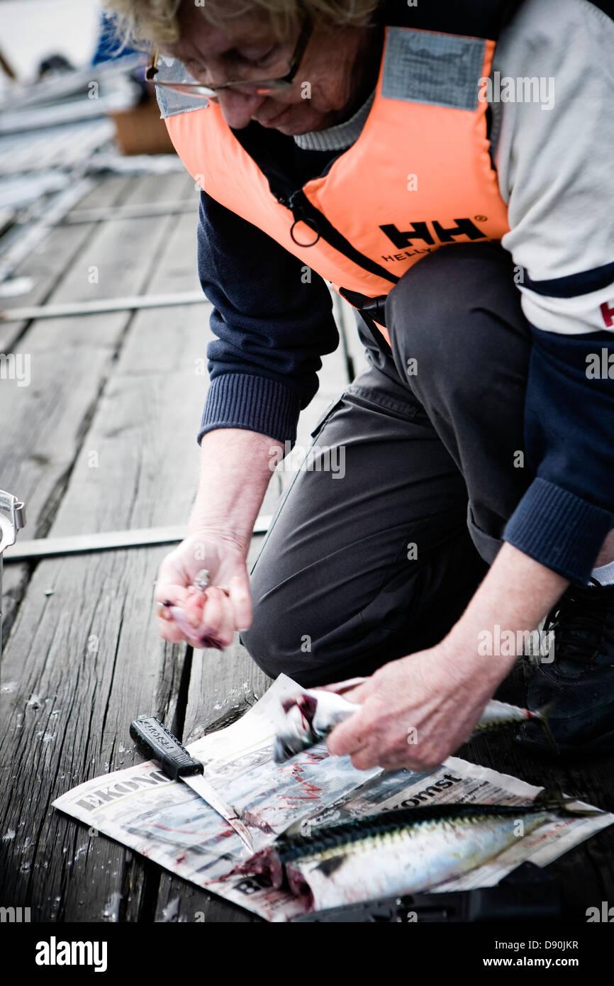 Close-up of man flaying Atlantic mackerel - Stock Image