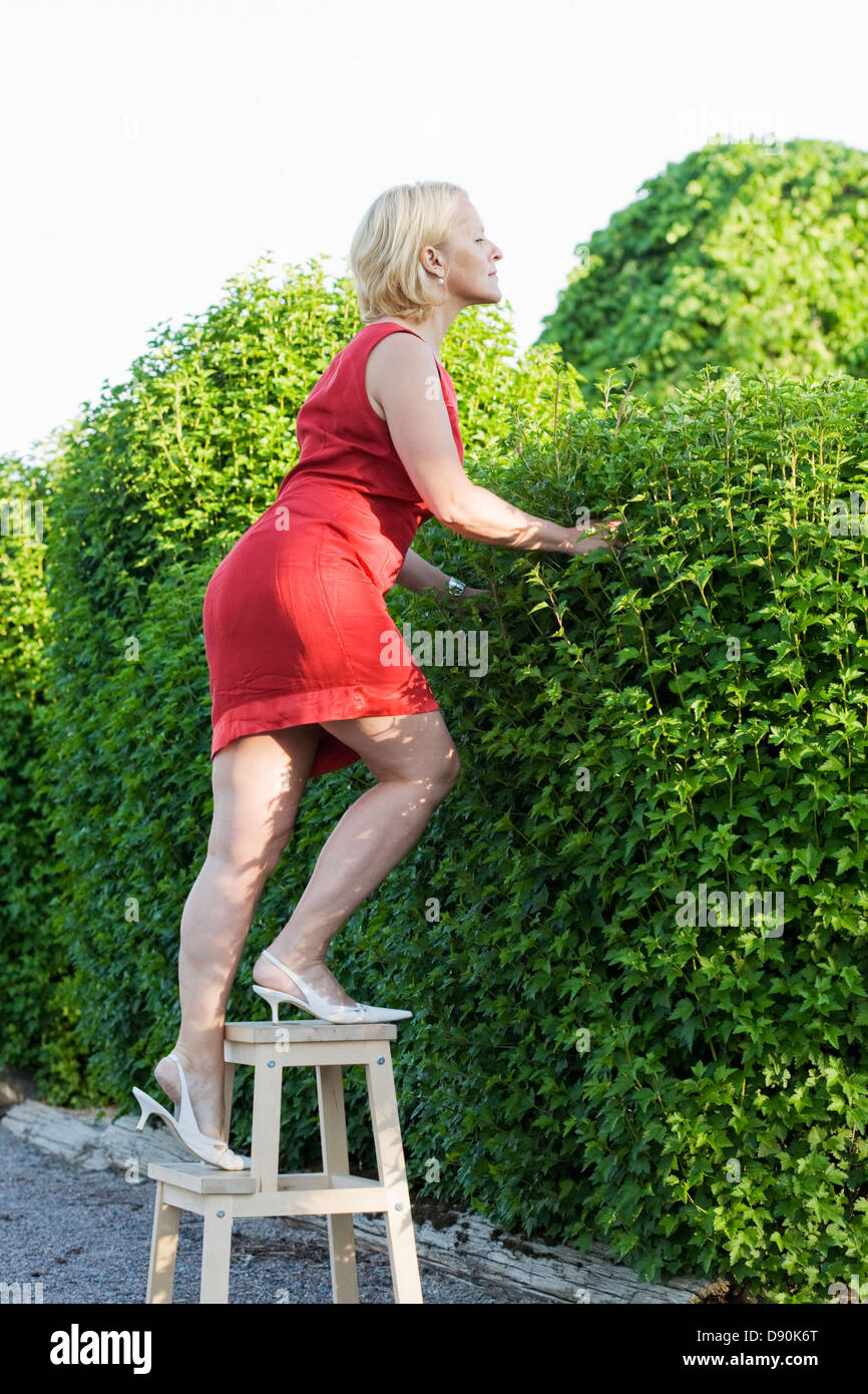 Side view of mature woman on footstool peeking over hedge - Stock Image