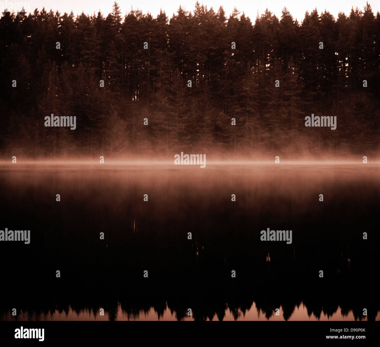 A forest by a lake, Dalarna, Sweden. - Stock Image