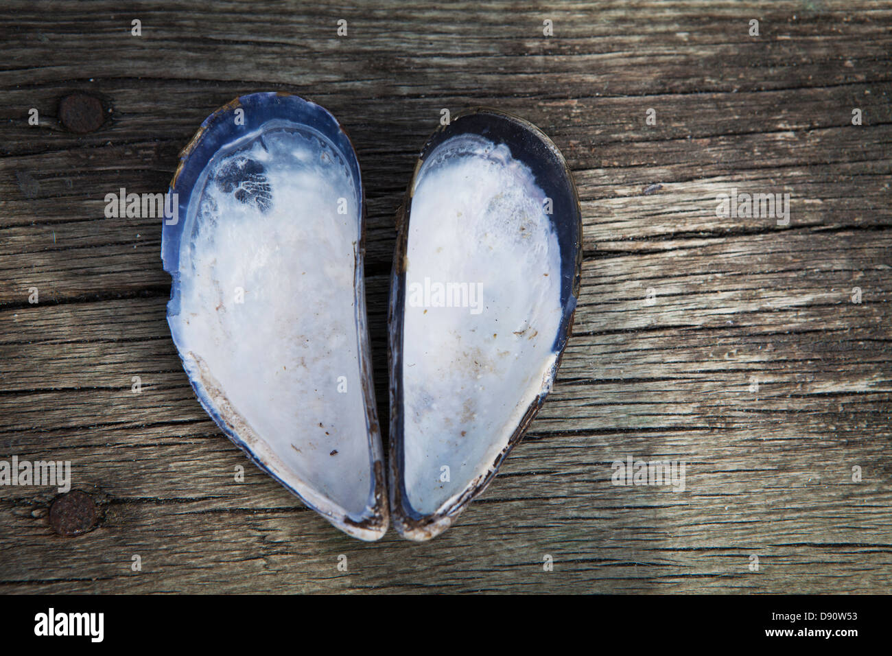 Heartshaped sell - Stock Image