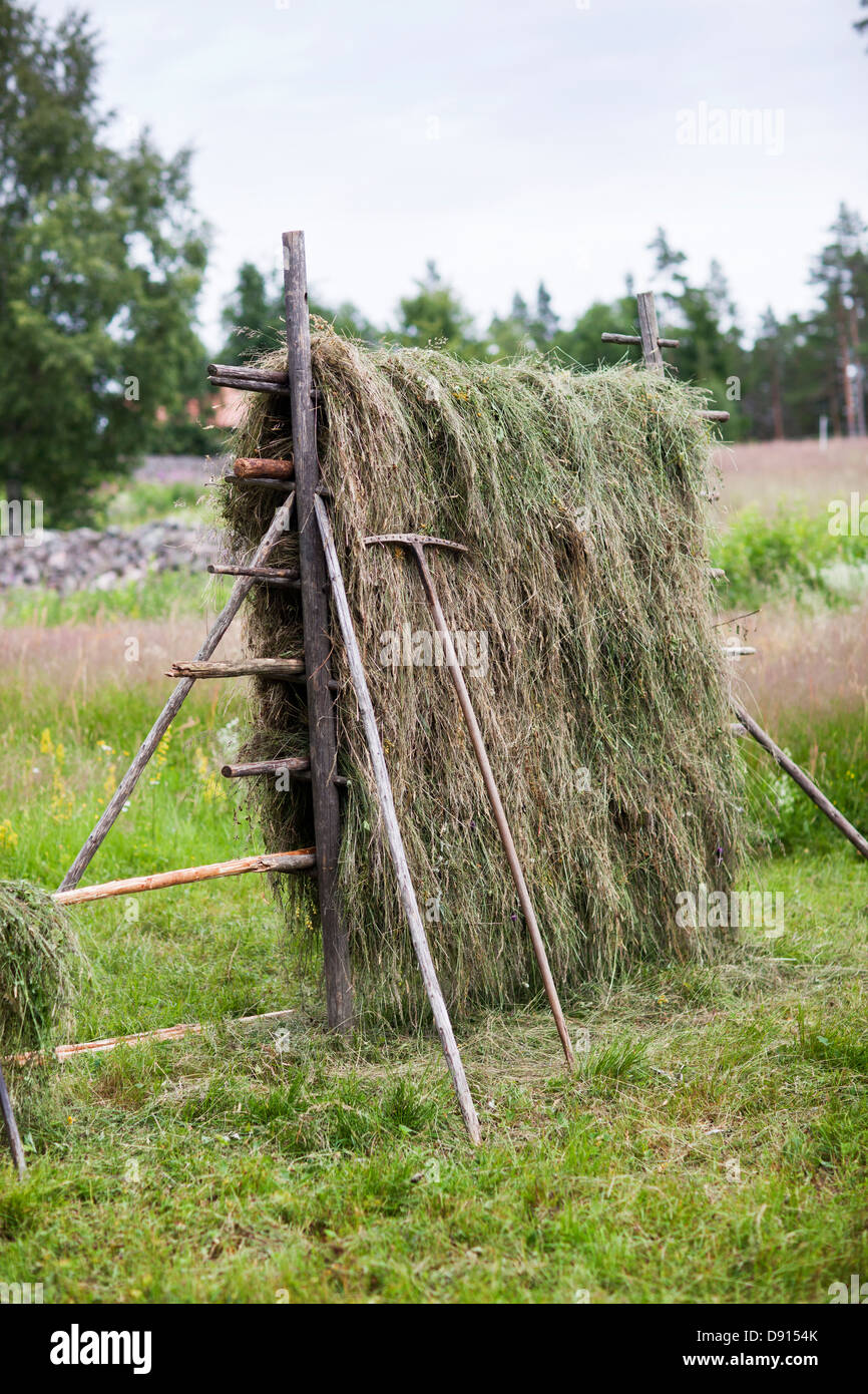 Hay-drying rack on field - Stock Image
