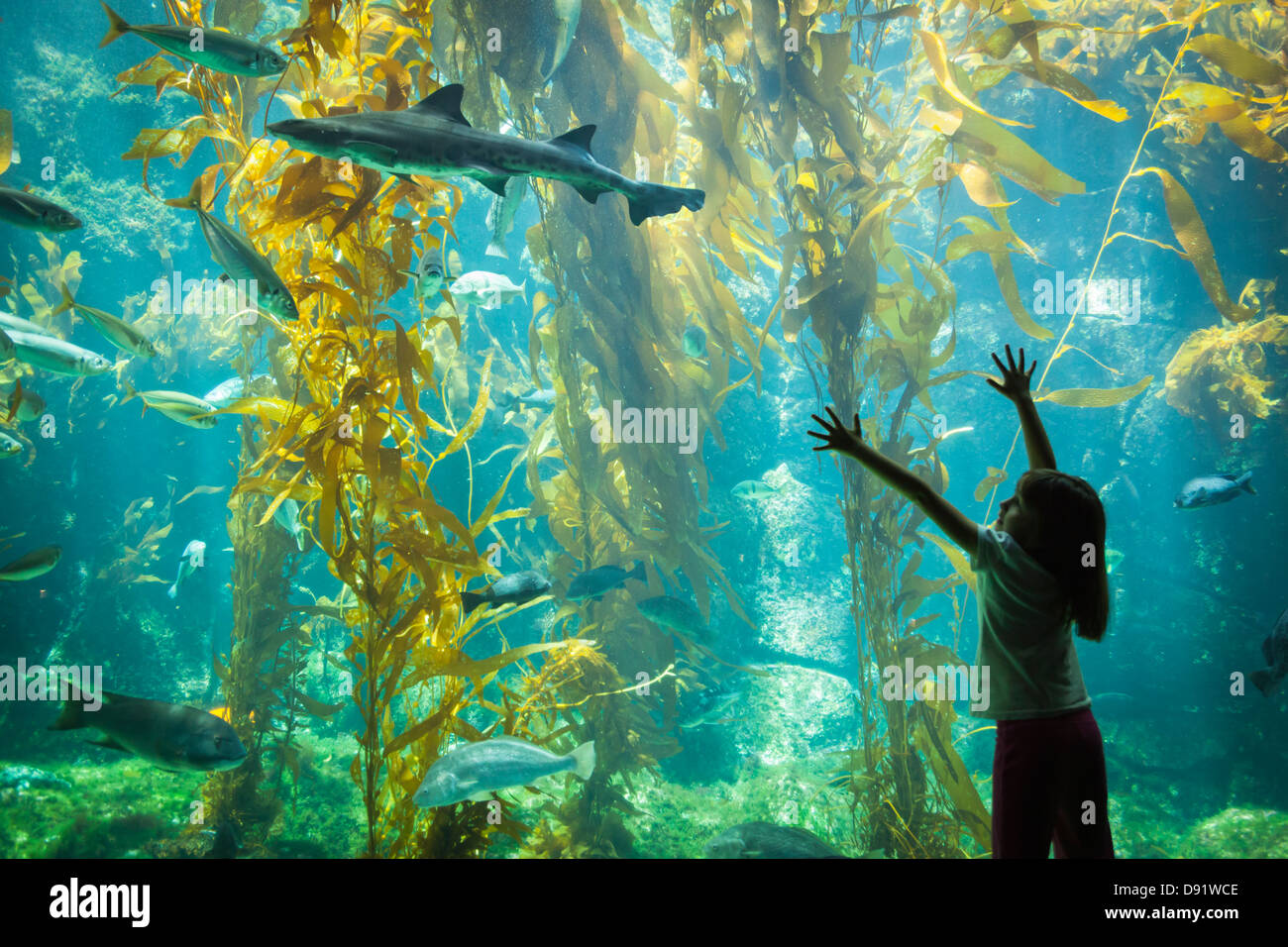 Amazed Young Girl Standing Up Against Large Aquarium Observation Glass Reaching for Leopard Shark. - Stock Image
