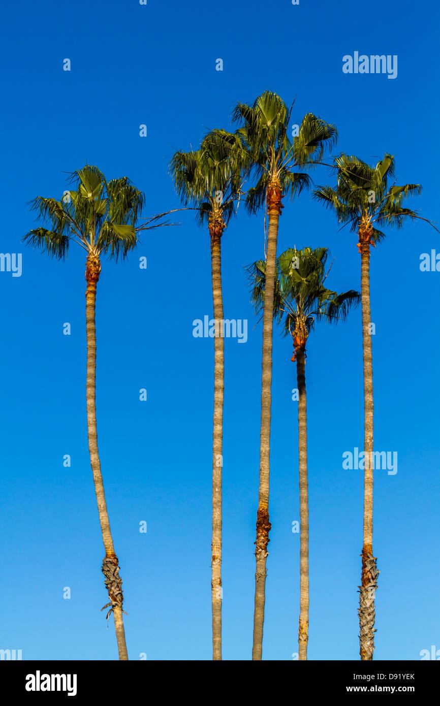 Palm Trees, Mission San Juan Capistrano Stock Photo