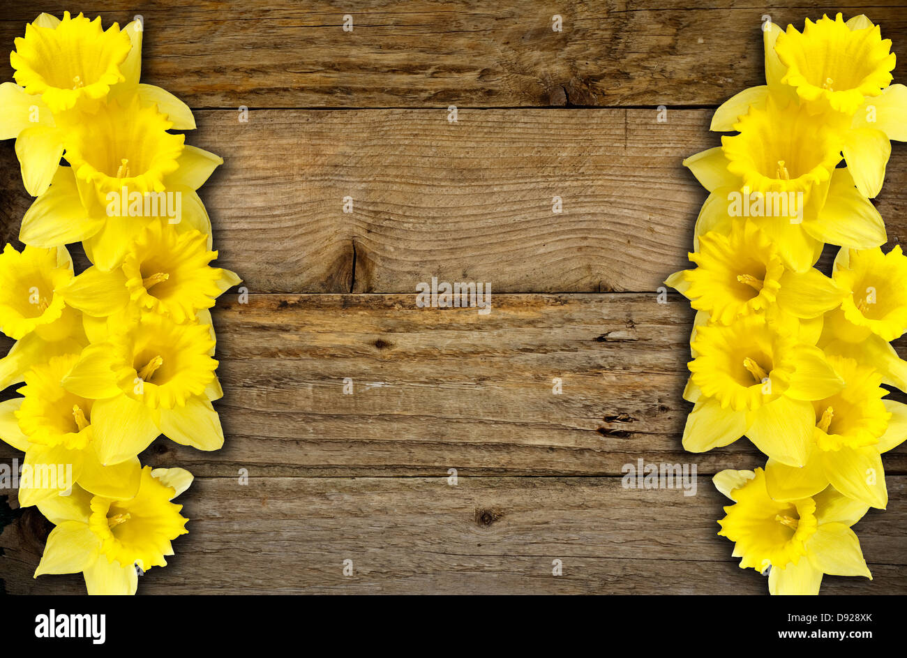 wooden plank rustic background with a daffodil border great for springtime - Stock Image