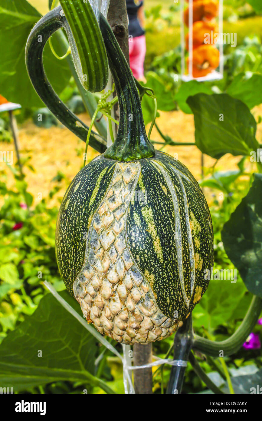 The carve gourd in thailand - Stock Image