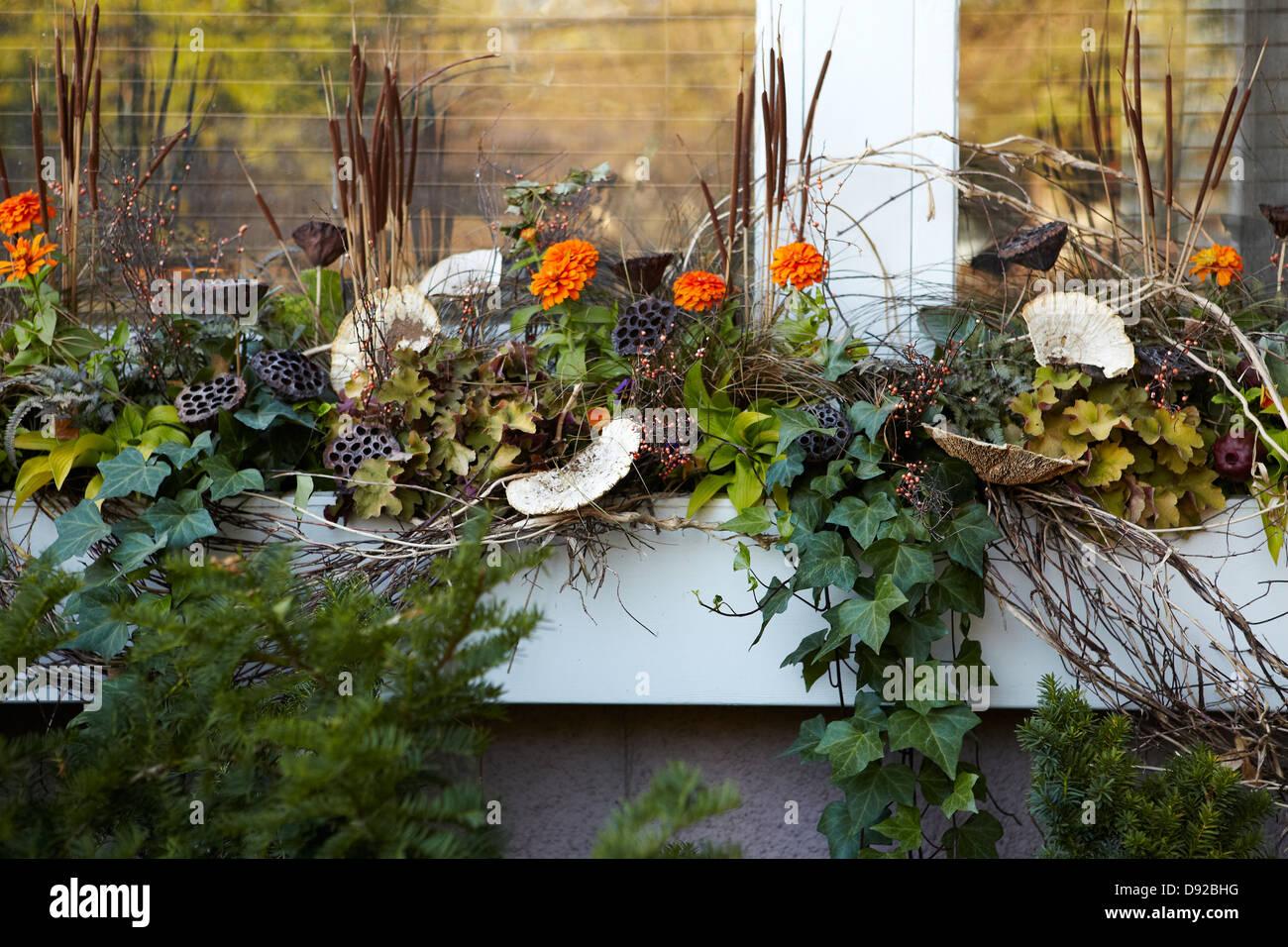 Window box decorated for Autumn season - Stock Image