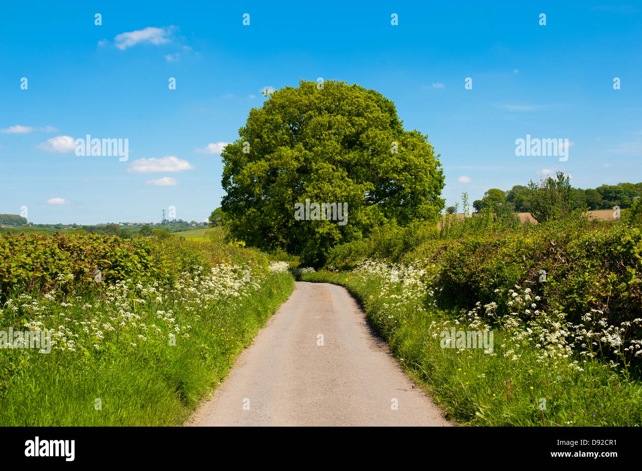 An English country lane in Shropshire Stock Photo