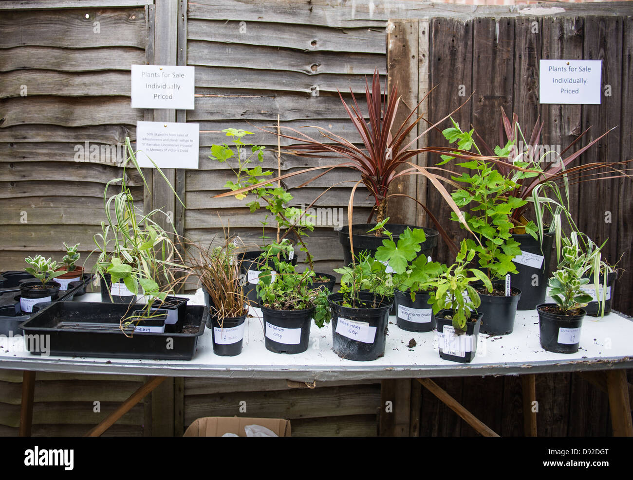 A shelf of plants for sale at an Open Garden event - Stock Image