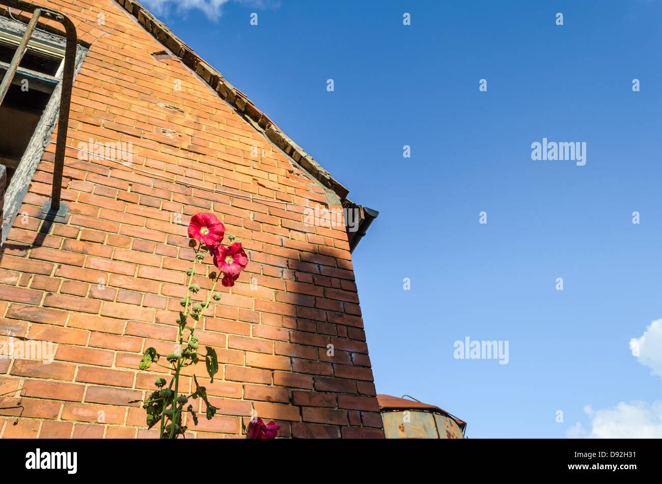 Colorful flowers against an old brick building in Moreton. Moreton-in-Marsh, Gloucestershire, England. - Stock Image