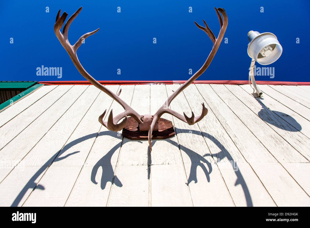 Eureka Lodge, roadhouse and restaurant.  Caribou antlers adorn an out building. - Stock Image