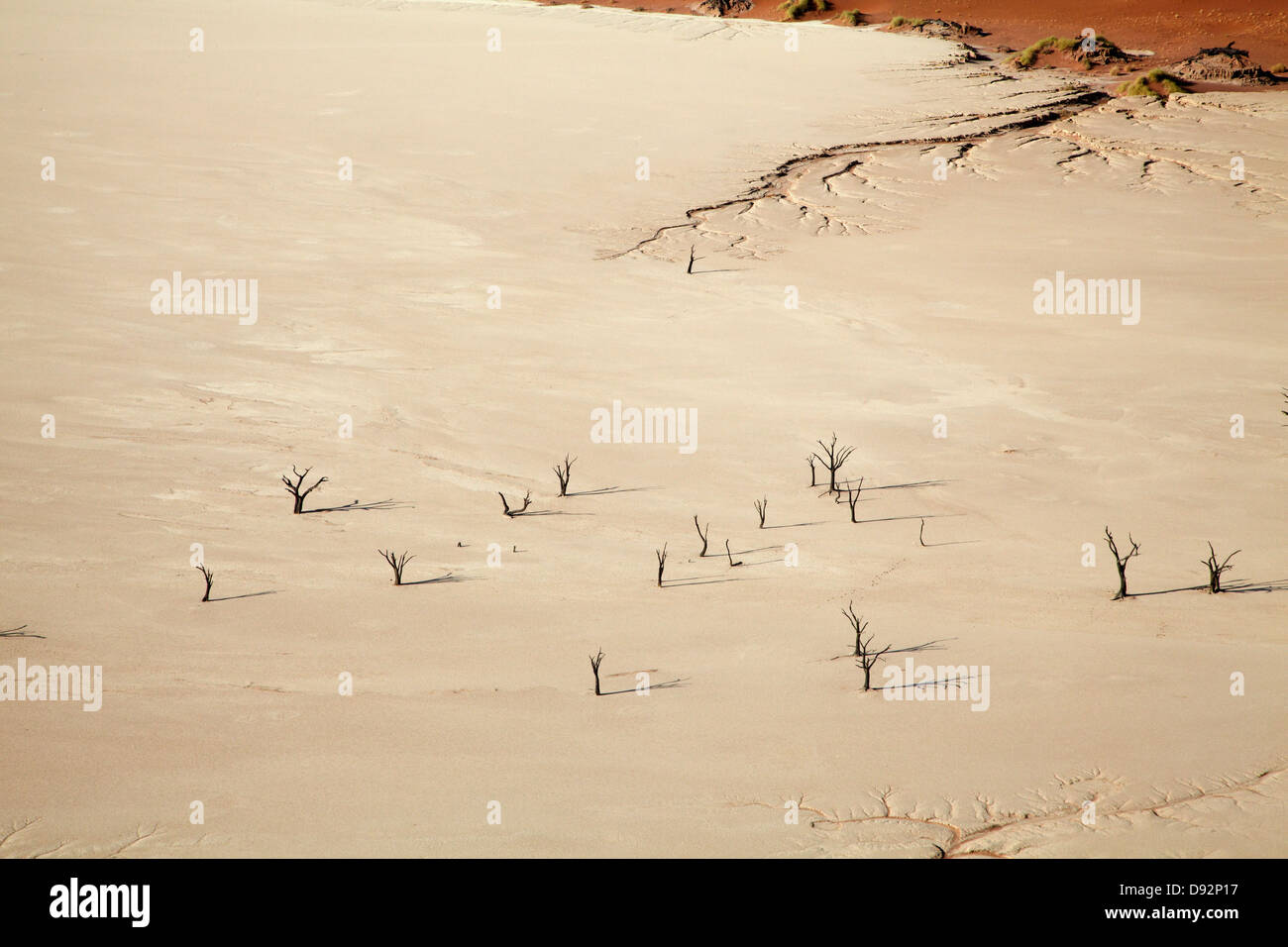Dead trees (thought to be 900 years old) on Deadvlei, near Sossusvlei, Namib-Naukluft National Park, Namibia, Africa - Stock Image
