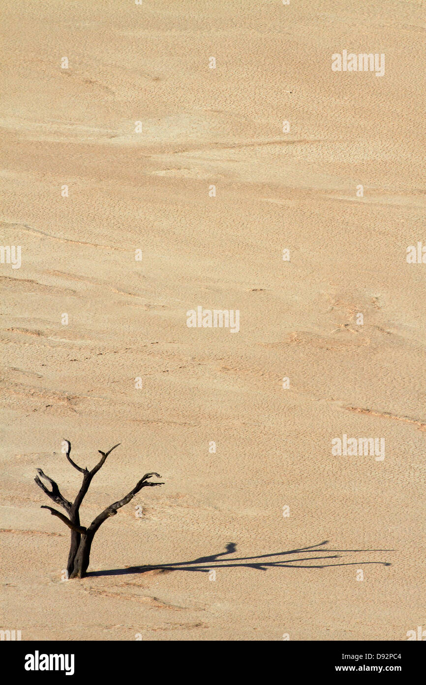 Dead tree (thought to be 900 years old) on Deadvlei, near Sossusvlei, Namib-Naukluft National Park, Namibia, Africa - Stock Image