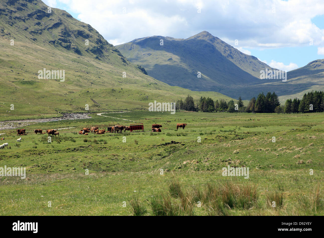 Ben Challum at the end of Glen Lochay in Perthshire Scotland - Stock Image