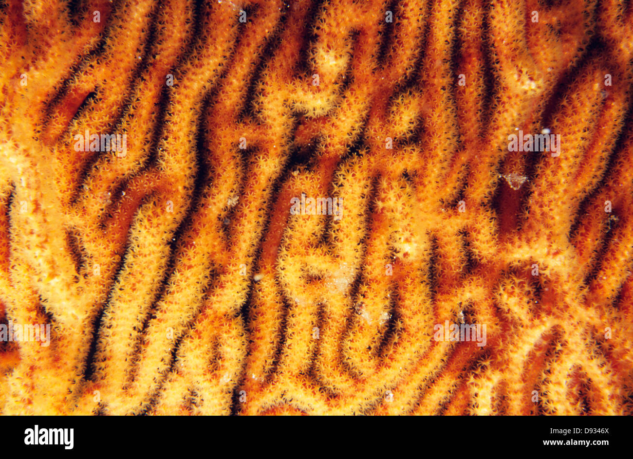 Algae, close-up - Stock Image