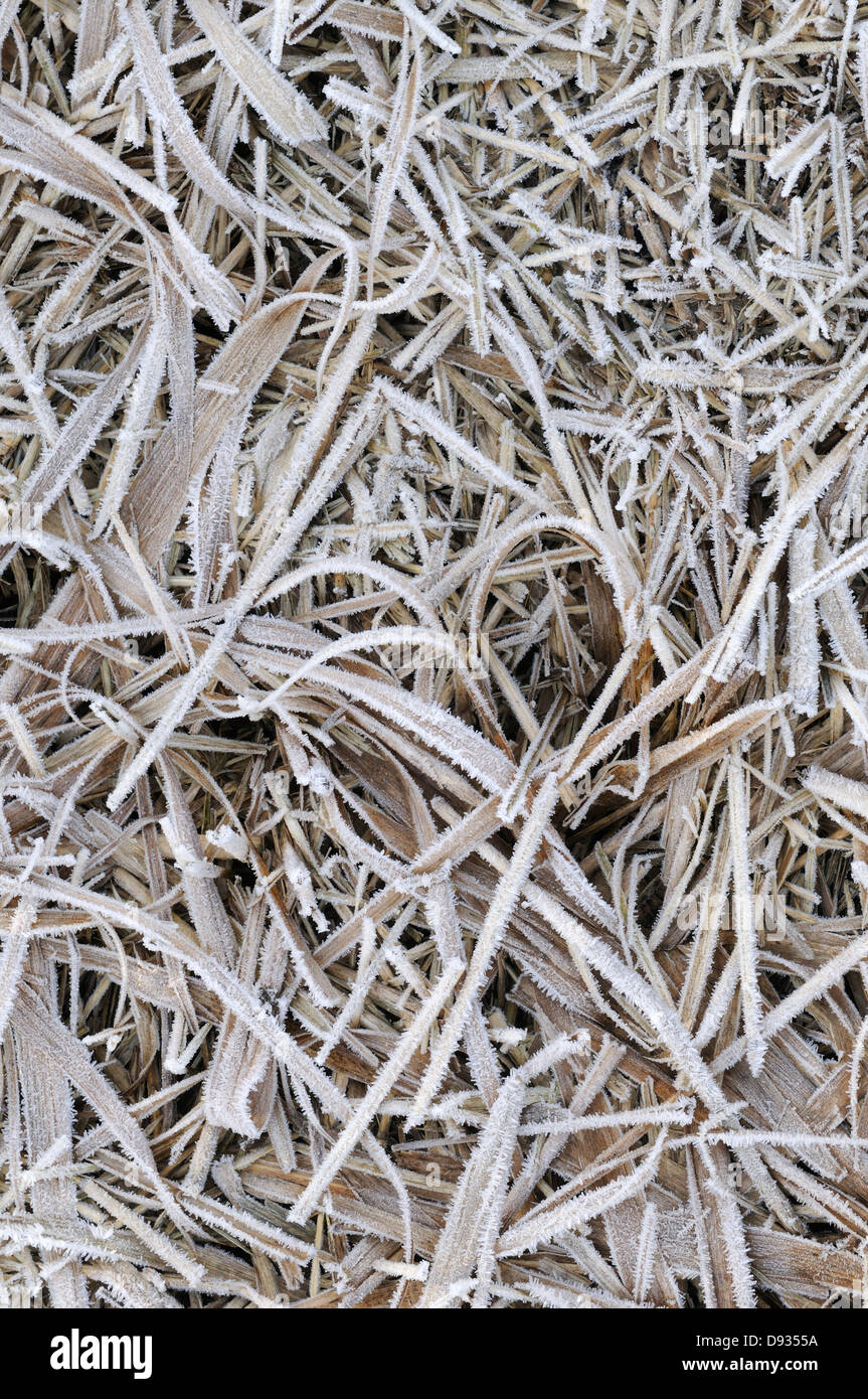 Frost on the ground. - Stock Image