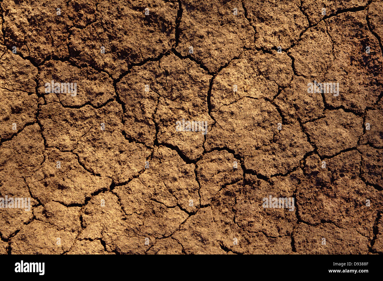 Dry soil texture on the ground - Stock Image