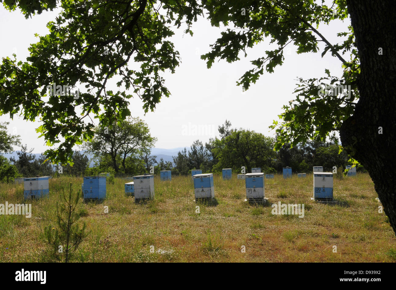 Bee hives, Dadia Highland, Thrace, Greece - Stock Image