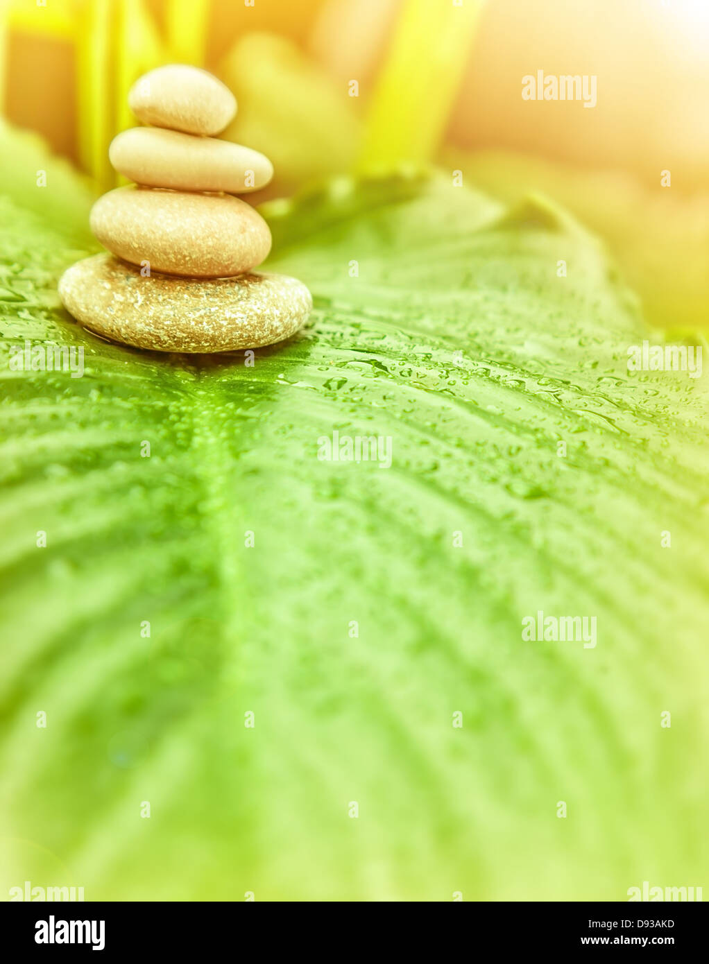 spa stones on green leaf outdoors alternative medicine zen balance