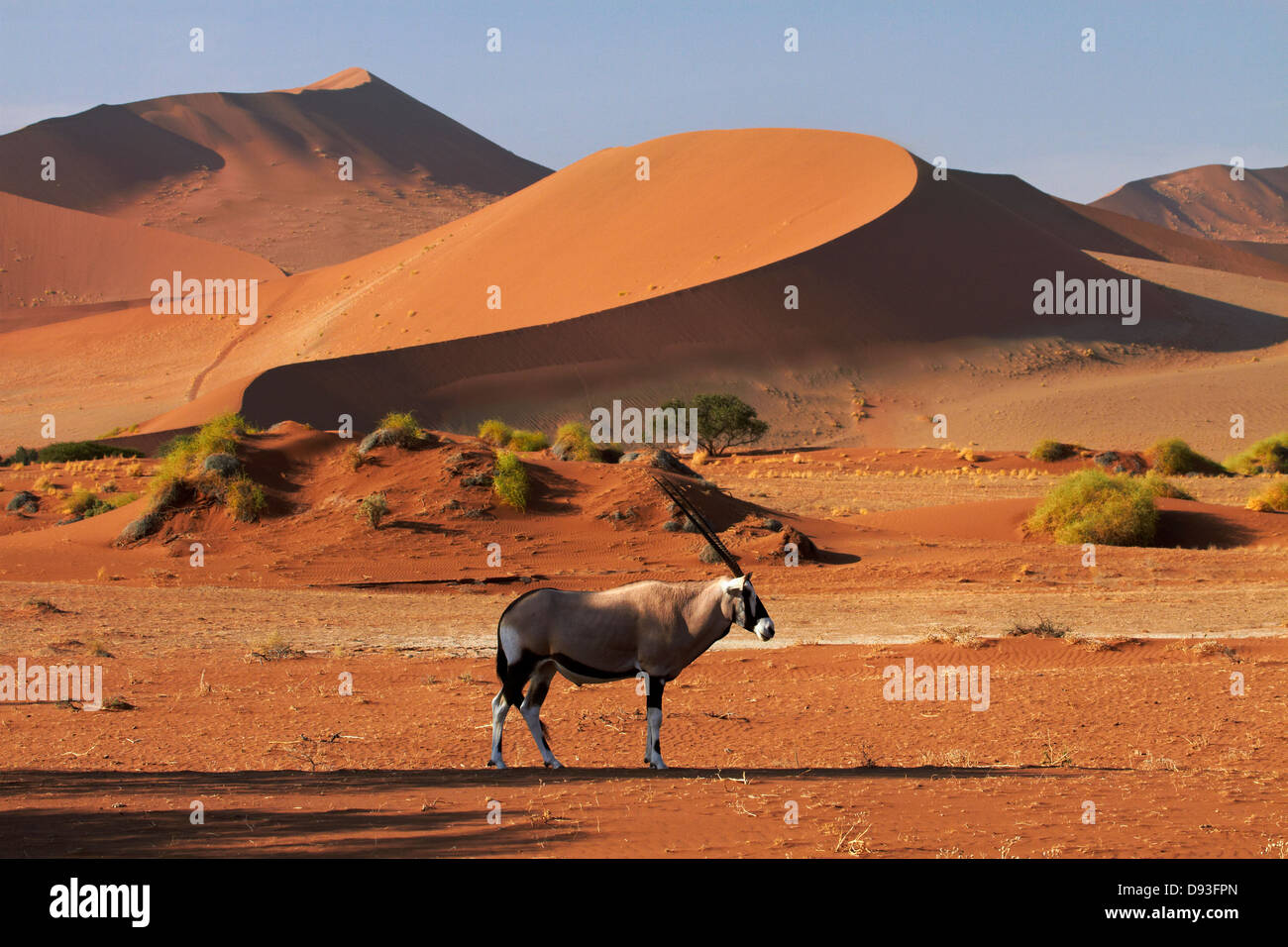 Gemsbok (oryx), and sand dunes, Namib-Naukluft National Park, Namibia, Africa - Stock Image