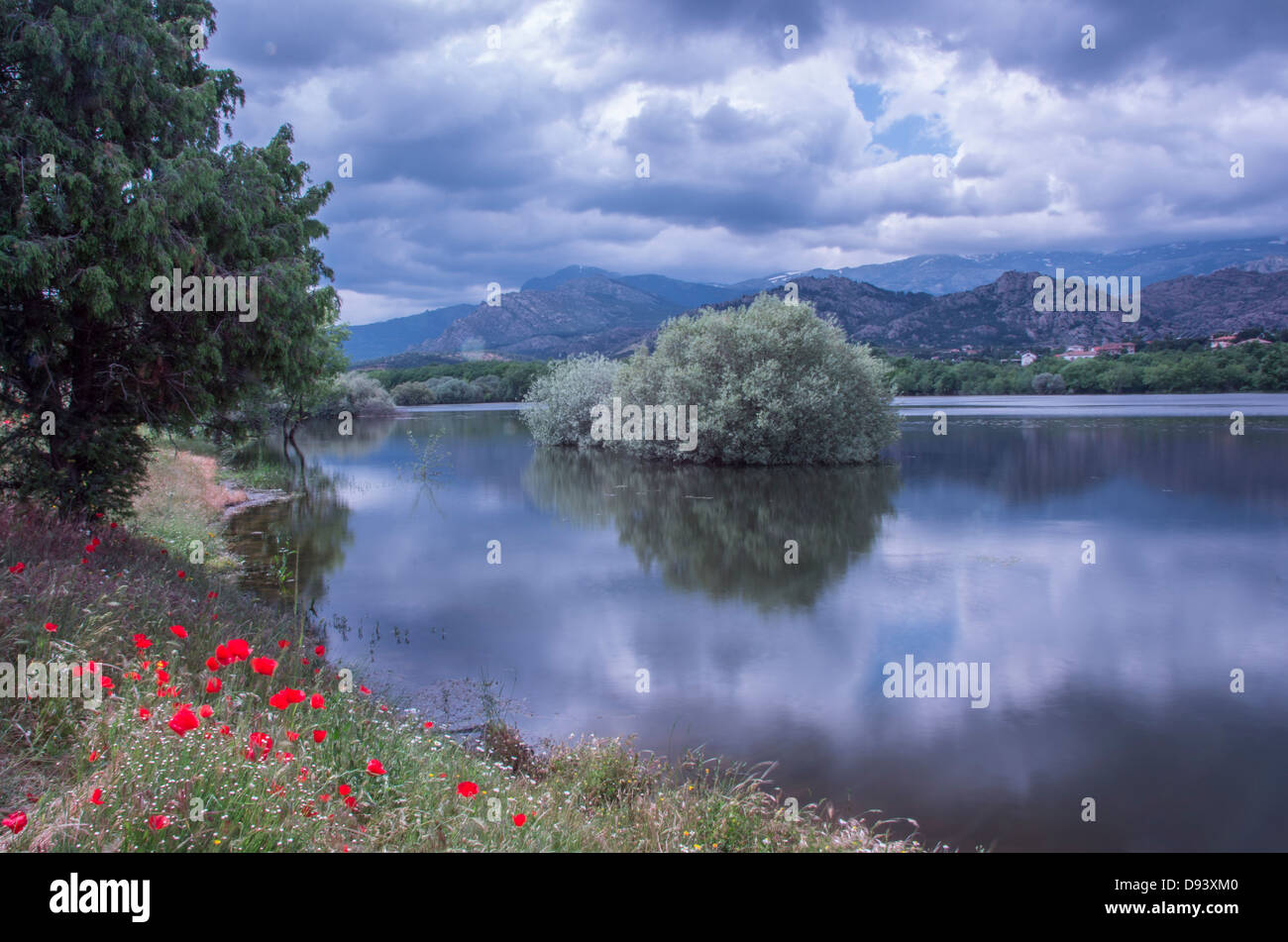 Landscape in Manzanares del Real lake in Regional Park of Manzanares in Madrid. Reflections of one big bush in the Stock Photo